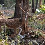 Bhadra-Wildlife