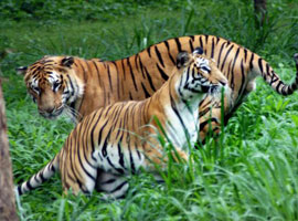 wildlife-sanctuary-in bangalore